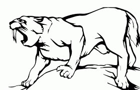 tiger coloring book pages saber tooth tiger coloring page coloring home