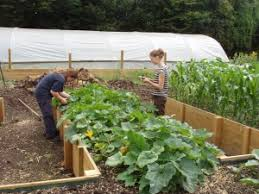 raised bed vegetable gardening for beginners healing body and mind
