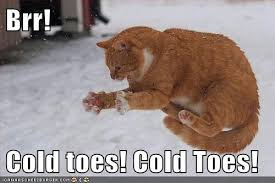 So Cold Meme - the eco cat lady speaks the miracle of defeet