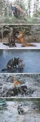 11 bluetick coonhound puppies in a bathtub best 20 hound dog ideas on pinterest hound dog puppies bassett