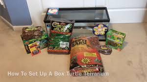 how to set up a box turtle terrarium youtube