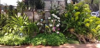 philippine orchid events enjoying the of plants and