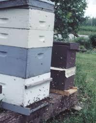 Raising Bees In Backyard by Beekeeping 101 Diy Beekeeping Supplies Plans And Ideas