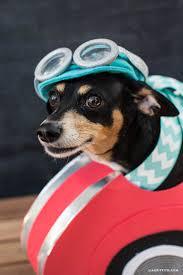 race car halloween dog costume lia griffith