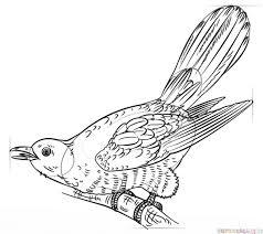 draw cuckoo step step drawing tutorials