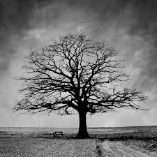 free stock photos rgbstock free stock images lonely tree
