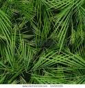 palm tree leaf cut out