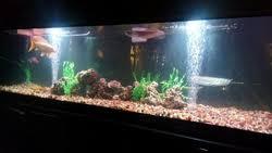 designer aquarium aqua silvan wholesaler of designer aquarium aquarium from pune