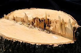 wood artwork wood mountains photograph by wanda brandon