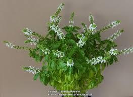 indoor herb gardening garden org