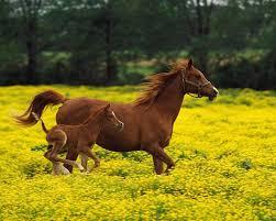 Nice Hourse Horse Superb Morning Animal Mom Amazing Beautiful Nice Walk Cool