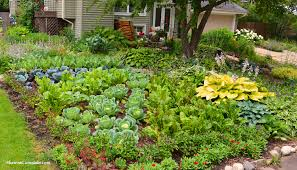 neat design front yard vegetable garden designs category bathroom