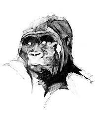 philipp zurmöhle u2013 illustration and design u2013 monkey drawings