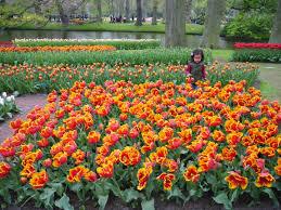 flower garden in amsterdam amsterdam keukenhof gardens part five u2013 viktoria jean