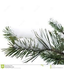 snow and christmas tree christmas lights decoration