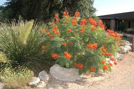 native mexican plants sportsandoutdoors guru outdoor types beware the desert is in bloom