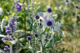 20 plants for dry shade gardenersworld com