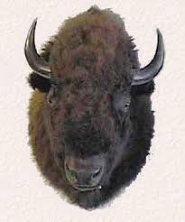 How Much Does A Bear Rug Cost Bison U0026 Buffalo Skulls Mounts And Rugs For Sale Bill U0027s Bear