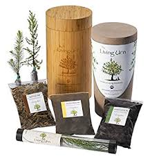 the living urn biodegradable tree urn and planting