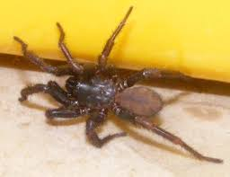 Are Spiders Attracted To Light Common Usa Spiders At Spiderzrule The Best Site In The World