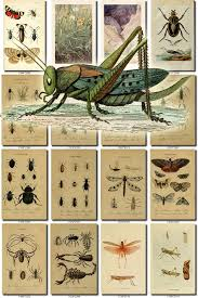 insects 11 collection of 254 vintage animals images grasshopper
