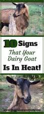 3419 best homestead livestock images on pinterest raising