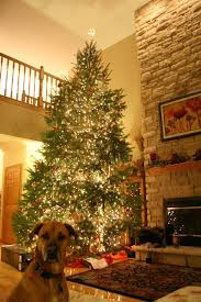 the tree i can t wait for a pine smelling