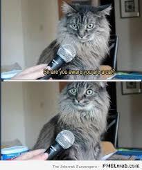 Silly Cat Memes - 20 hilarious cat meme pmslweb