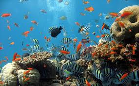 underwater sea creatures 1920x1200