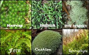 live moss u0026 lichen 1 gallon bag best deal and quality beautiful