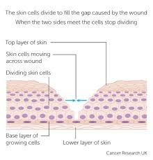 What Is Dead Tissue Called How Cells And Tissues Grow Cancer Research Uk