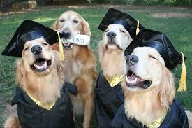 dog graduation cap unum on rt cgada join us for service dog graduation