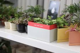 plants make a happy home u2013 life with alfred u2014 the official hello