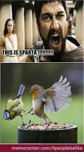 This Is Sparta Meme - this is sparta bird version by itpeoplebelike meme center
