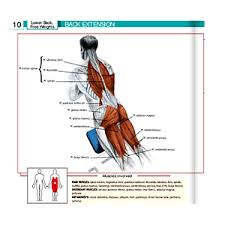 Incline Bench Muscle Group Gym Equipment Guide For Beginners Names And Pictures