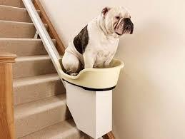 siege escalier pourquoi avoir un fauteuil monte escalier fonctions et utilités