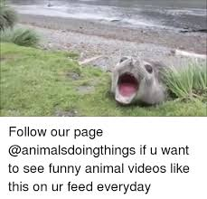 Funny Animal Memes - 25 best memes about funny animal funny animal memes