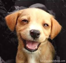 Puppy Face Meme - happy puppy face meme generator