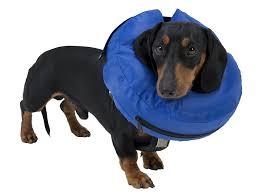 buster inflatable collar m amazon co uk pet supplies
