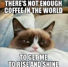 Unhappy Cat Meme - 17 best famous grumpy cat memes images on pinterest ha ha cat