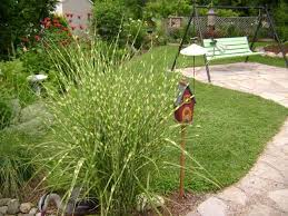 ornamental grass in garden design outdoortheme