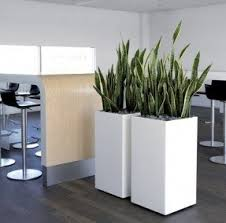 tall indoor planters foter