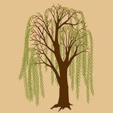 amazing weeping willow tree design ideas and meaning willow