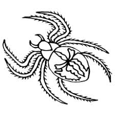 Spider Color Pages Top 10 Free Printable Spider Coloring Pages Online by Spider Color Pages