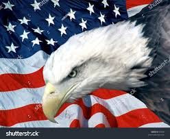 Bald Eagle And American Flag American Bald Eagle Infront American Flag Stock Photo 50406
