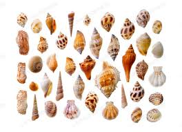 assorted seashells photos on envato elements