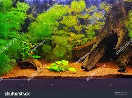 Home Aquarium Beautiful Home Aquarium Stock Photo 89242870 Shutterstock