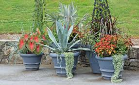 sunshine advancedplant big with ssa rain forest blend sunshine