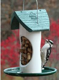 goldfinches love this feeder fill with black oil sunflower seeds