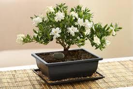 Indoor Flower Plants Best Indoor Flowers And Plants For The Winter Petal Talk